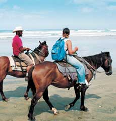 Horseriding on the  beach or in the bush