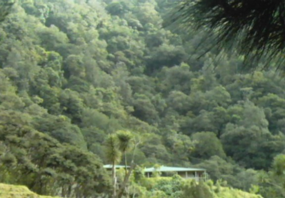 The Lodge is nestled in the dense native forest.